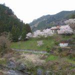 近所の桜と奥多摩方面